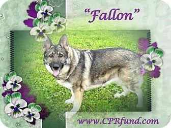 German Shepherd Dog Dog for adoption in Lowell, Indiana - Fallon