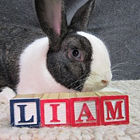 Other/Unknown Mix for adoption in Newport, Delaware - Liam