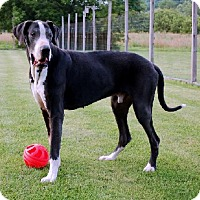 Adopt A Pet :: Zion - Pearl River, NY