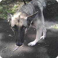 Adopt A Pet :: Vala - Inverness, FL