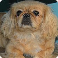 Adopt A Pet :: Pansy - Prole, IA