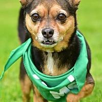 Adopt A Pet :: NUGGET - Marina Del Ray, CA