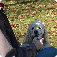 Adopt A Pet :: Fluff Nuffy - Afton, NY