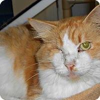 Adopt A Pet :: Wink - Chesapeake, VA