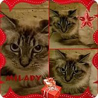 Adopt A Pet :: Milady DeWinter - Ennis, TX