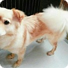 Adopt A Pet :: Faith