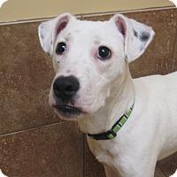Adopt A Pet :: Lucas *REBOUND* - Appleton, WI