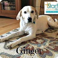 Adopt A Pet :: Ginger - Plainfield, IL