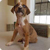 Adopt A Pet :: Cinder - New Oxford, PA