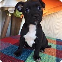 Adopt A Pet :: HERO - Elk Grove, CA