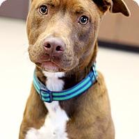 Adopt A Pet :: Draego - Appleton, WI