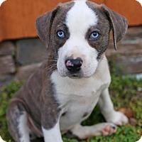 Adopt A Pet :: Sassafras - Washington, DC