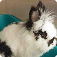 Adopt A Pet :: PINCO - Pittsburgh, PA