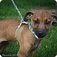 Adopt A Pet :: Oscar - Broomfield, CO