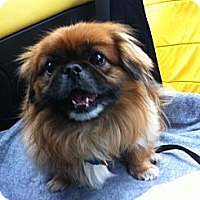 Adopt A Pet :: Monkey (in Maine) - Vansant, VA