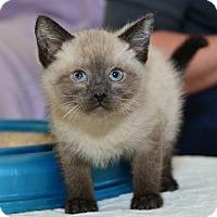 Adopt A Pet :: Elliott - Davis, CA