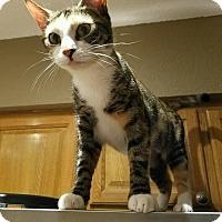 Adopt A Pet :: Gigi - Ft. Lauderdale, FL