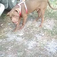 Adopt A Pet :: Freedom - Wytheville, VA