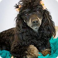 Adopt A Pet :: Abby - Phelan, CA