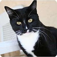 Adopt A Pet :: Tiki - Naples, FL