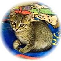 Adopt A Pet :: Brenda - Shelton, WA