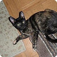 Adopt A Pet :: Roxie - Norwich, NY