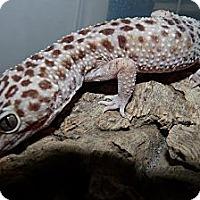 Adopt A Pet :: Frank - Richmond, BC