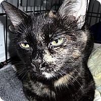 Adopt A Pet :: Torrie - Kalamazoo, MI