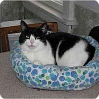 Adopt A Pet :: Vickie - North Boston, NY