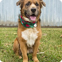 Adopt A Pet :: Gable - Houston, TX