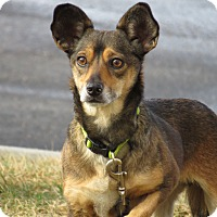 Adopt A Pet :: Chase - Meridian, ID