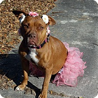 Adopt A Pet :: Cassie - Darlington, SC