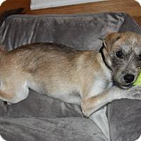 Adopt A Pet :: Gemma - Mt. Prospect, IL