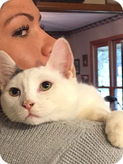 Domestic Mediumhair Kitten for adoption in Lincolnton, North Carolina - Squirrel $35