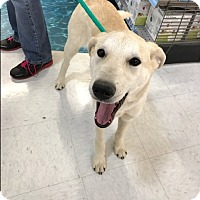 Adopt A Pet :: Radcliffe - Evergreen, CO