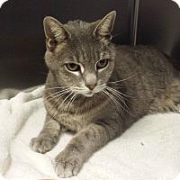 Adopt A Pet :: Brewster - Westminster, CA