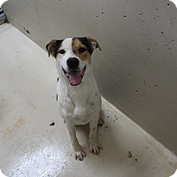 Adopt A Pet :: A03 Williams - Odessa, TX