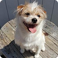 Adopt A Pet :: Wally - East Hartford, CT