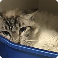 Adopt A Pet :: Dakota - Newport, NC