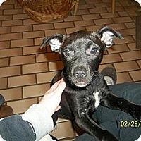 Adopt A Pet :: Jolie - Hancock, MI