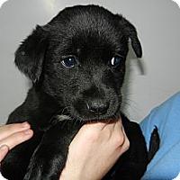 Adopt A Pet :: Patti - South Jersey, NJ