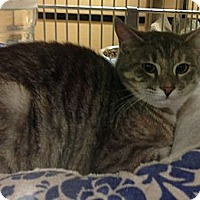 Adopt A Pet :: Lattie - Monroe, GA