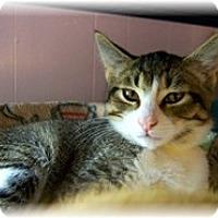 Adopt A Pet :: Owen - Shelton, WA