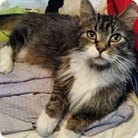 Adopt A Pet :: Priscilla - East Hanover, NJ