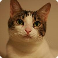 Adopt A Pet :: Joy - Canoga Park, CA