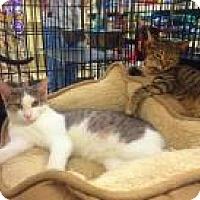 Adopt A Pet :: Taylor and Tanner - Bear, DE