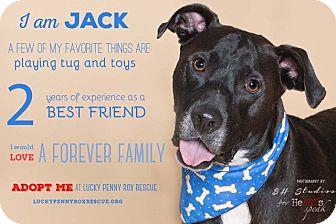 Labrador Retriever Mix Dog for adoption in Vancouver, British Columbia - A -Jack