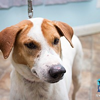 Adopt A Pet :: Ivy - Evansville, IN