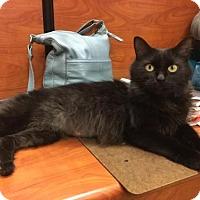 Adopt A Pet :: Cleo - Memphis, TN