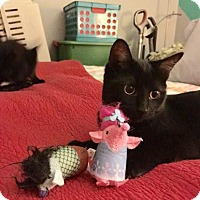 Adopt A Pet :: Mouse/Tigger - Chicago, IL